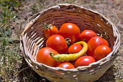 nya tomater Royaltyfria Bilder