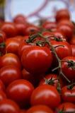 nya tomater Arkivbilder
