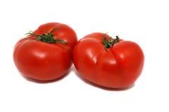 nya tomater Royaltyfri Bild