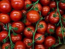 nya tomater för Cherry Körsbärsröd skörd för unga tomater många körsbärsröda tomater Landskap En bakgrund av körsbärsröda tomater Arkivfoton
