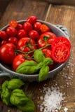Nya tomater i en bunke Arkivfoton