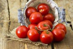 Nya tomater i en korg Arkivbilder