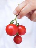 Nya tomater i kvinnahand Royaltyfria Bilder