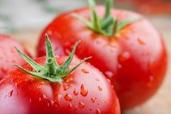 Nya tomater med vattendroppar Arkivbild
