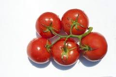 Nya tomater på en vit bakgrund Arkivfoto