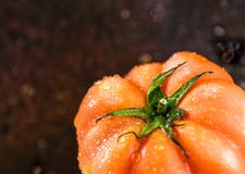 nya tomater röda tomater Royaltyfri Fotografi