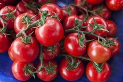 nya tomater röda tomater Organiska tomater för bymarknad Kvalitativ bakgrund från tomater Royaltyfri Fotografi