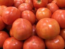 Nya tomater som är högra av vinrankan Arkivbilder