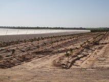 Nya trädgårds- Israel Negev frukter royaltyfri foto