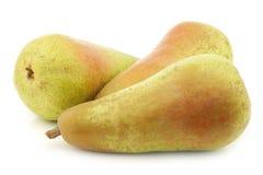 Nya tre minskar päron arkivbild