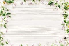 Nya tusenskönalilablommor och grön örtram på vitt trä Royaltyfri Bild