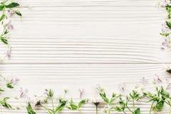 Nya tusenskönalilablommor och grön örtram på vitt trä Royaltyfri Foto
