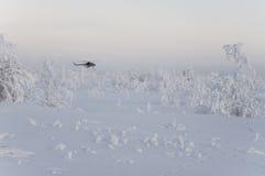 Nya Urengoy, YaNAO, nord av Ryssland Avia för helikopter UTair och Konvers i den lokala flygplatsen på servicen Januari 06, 2017  Royaltyfri Bild