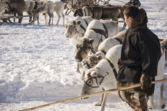 Nya Urengoy, YaNAO, nord av Ryssland Mars 1, 2016 Ferien av den norr nationaliteten Nenets man och norr hjortar i vinterdag Arkivbild