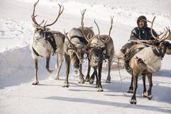 Nya Urengoy, YaNAO, nord av Ryssland Mars 1, 2016 Ferien av den norr nationaliteten Nenets man och norr hjortar i vinterdag Arkivfoton