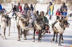 Nya Urengoy, YaNAO, nord av Ryssland Mars 1, 2016 Ferien av den norr nationaliteten Nenets man och norr hjortar i vinterdag Arkivfoto