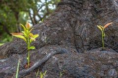 Nya växande träd Arkivfoto