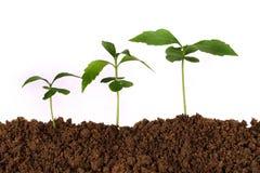 nya växter för beginninglivstid arkivfoton