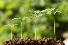 nya växter för beginninglivstid arkivbild