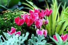 nya växter för höstunderlag royaltyfria foton