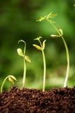 nya växter för livstid Royaltyfri Bild