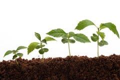 nya växter för livstid Royaltyfri Fotografi