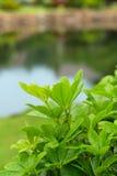 Nya växter med daggdroppar Royaltyfri Foto