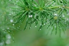 Nya växter med regndroppar Arkivfoton