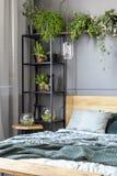Nya växter som förläggas i grå färger, hyr rum inre med metallkuggen med D Royaltyfri Foto