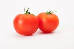 Nya våta tomatfrukter Royaltyfri Bild