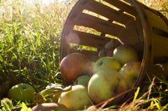 Nya valda äpplen 3 Fotografering för Bildbyråer