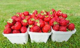 nya valda jordgubbar Arkivfoto
