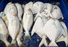 Nya vita pomfret fiskar, på den havs- marknaden arkivfoto