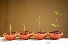 nya växter för livstid Arkivbilder