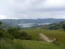 Nya Zeeland 5 Arkivfoton