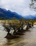 Nya Zeeland i sommaren Arkivfoton