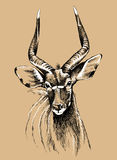 Nyala portrait. Sketch of a male nyala antelope in black and white on a colored background Royalty Free Stock Photos