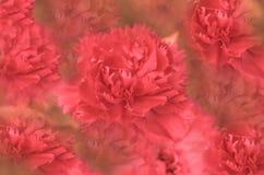 nyanserad blomma Arkivbild