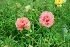 nyanserad blomma Royaltyfri Foto