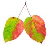 nyanserade leaves två royaltyfri bild
