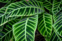 Nyanserat grönt abstrakt begrepp för bladväxtbakgrund royaltyfri bild