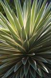 nyanserat karibiskt för agave Royaltyfri Bild