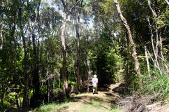 Nyazeeländsk buske royaltyfri foto