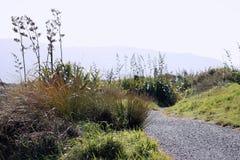 Nyazeeländsk kust- bana Royaltyfri Fotografi