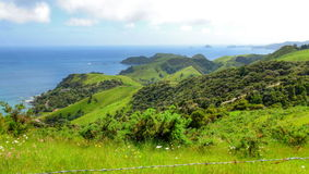 Nyazeeländsk natur Royaltyfri Fotografi