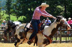Nyazeeländsk rodeo Royaltyfria Bilder