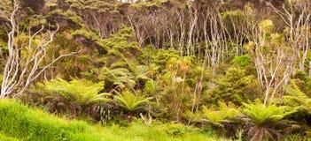 Nyazeeländsk skog av ormbunketräd och manukaträd Arkivfoto