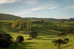 Nyazeeländska gröna kullar av Martinborough arkivbilder