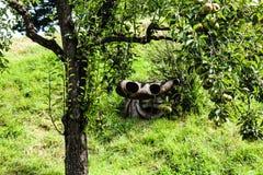 Nyazeeländska lantliga träd Royaltyfri Foto