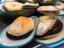 Nyazeeländska musslor arkivbilder